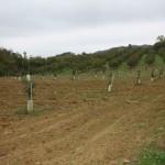 Haselnussfelder entlang des Sentiero della Valle Belbo