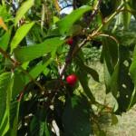 Unsere Arbeit trägt Früchte!