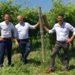 Drei Jungs im Weinberg