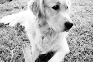 Ferien mit Hund im Piemont